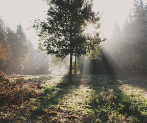 morning, nature, and sunlight image