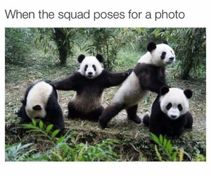funny, panda, and squad image