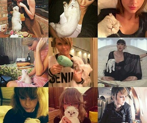 cats, so cute, and Taylor Swift image
