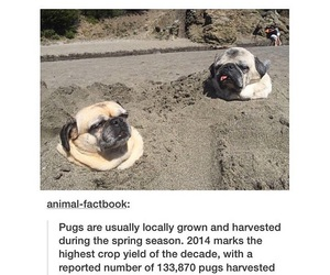 crops, dogs, and farm image