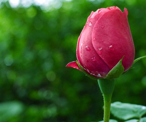 green, pink, and rosa image