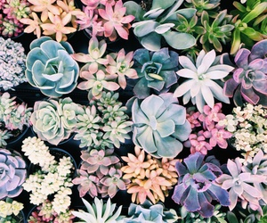 pattern and succulents image