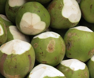 theme, coconut, and green image