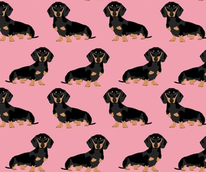 background, doggie, and pattern image