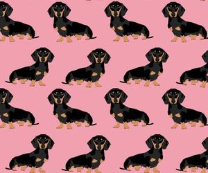 background, dachshund, and dog image