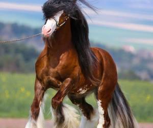 horse. love image