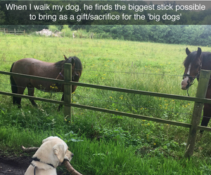 dog, funny, and horses image