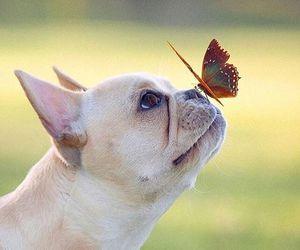 animals, dog, and nature image