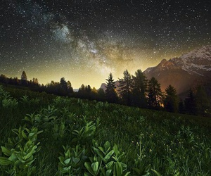 forest, stars, and grass image