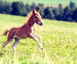 horse, cute, and foal image