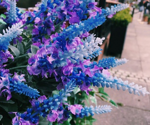aesthetic, blue, and plant image