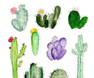 cactus, green, and plants image
