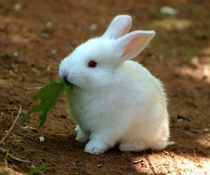 cute, bunny, and white image