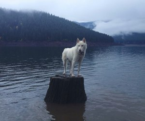dog, free, and water image