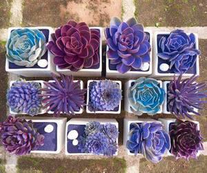 purple, plants, and flowers image