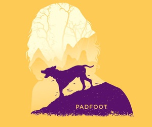 harry potter, padfoot, and sirius black image