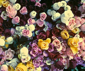 aesthetic, flowers, and harlem image