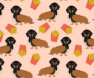 background, pattern, and dachshund image