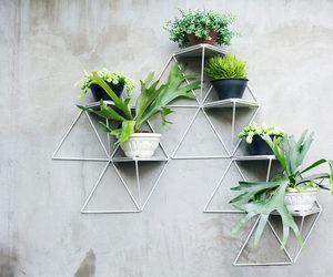 plants and shelf image
