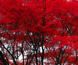 tree, red, and beautiful image