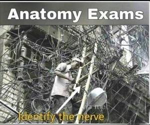 anatomy, medical, and biology image