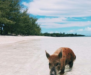 animals, summer, and travel image
