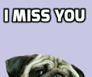 dogs, pugs, and purple image