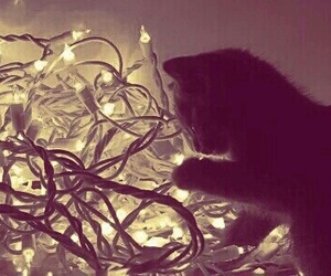 kitty, light, and cute image