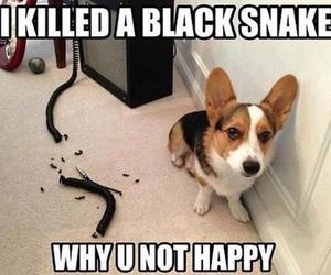 dog, funny, and snake image