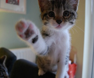 adorable, animals, and paw image