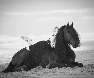 beach, equestrian, and black image