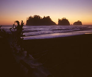 beach, forks, and ocean image