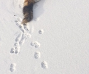black, cat, and footprints image