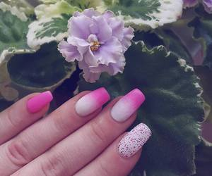 flowers, nails, and african violet image