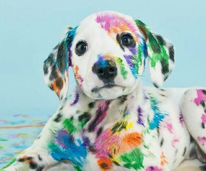 dog, animal, and colors image