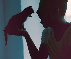 blue, kitty, and photography image