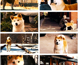 dog, hachiko, and movie image