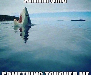 funny, shark, and lol image