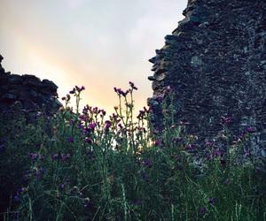 flowers, scotland, and scottish image