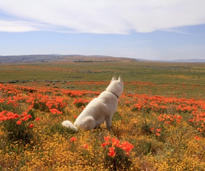 dog, flowers, and nature image