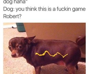funny, dog, and hot dog image