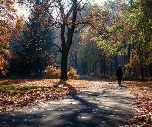 autumn, citadel, and fall image