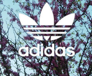 adidas, colorful, and flower image