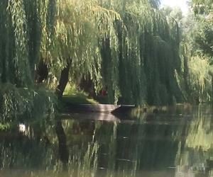 arbre, marais, and reflet image