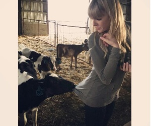 1989, taylor, and cow image