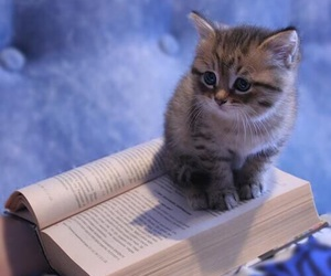 cat, kitten, and book image