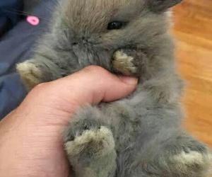 bunny, animal, and pet image
