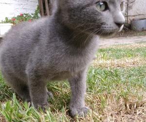 animals, cat, and gatito image