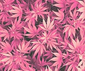 weed, purple, and marijuana image
