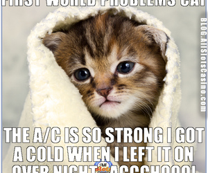 funny cats, first world problems, and cat image
